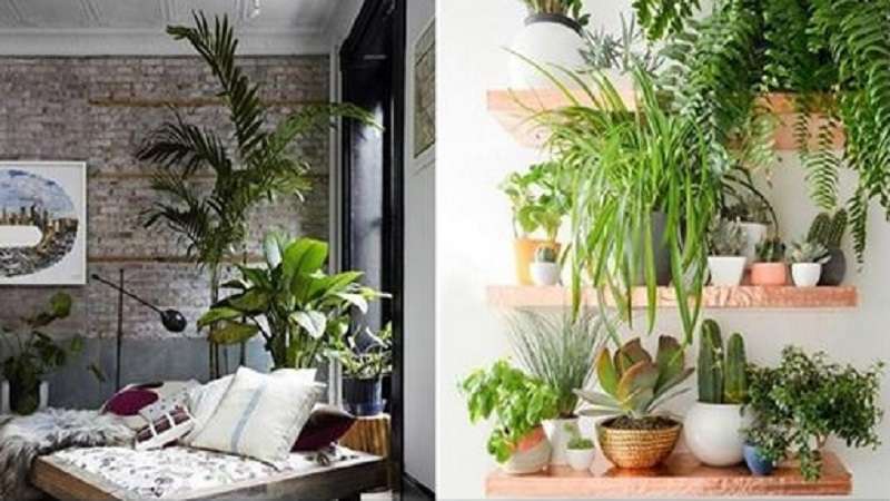 Les Plantes Pour Decorer Votre Maison Agence Immobiliere Tanger